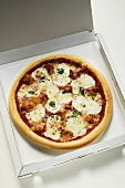 Mozzarella pizza in pizza box