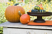 Assorted squashes and pumpkins on garden table (outdoors)