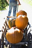 Person pulling wooden cart full of orange pumpkins (outdoors)