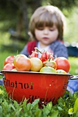 Various types of tomatoes in colander, small girl in background
