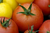 Various types of tomatoes with drops of water (close-up)