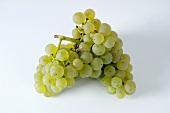 Green grapes, variety Schönburger