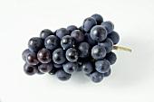 Black grapes, variety Müllerrebe