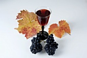 Glass of red wine & black grapes, variety Domina, with leaves