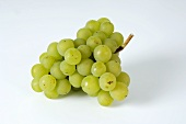 Green grapes, variety 'Kanzler'