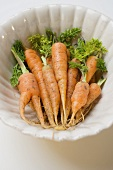 Young carrots in white dish