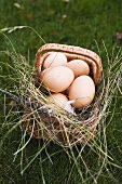 Brown eggs in a basket with hay on grass