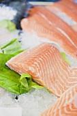 Fresh salmon fillets on ice