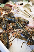Fresh lobsters on a market stall