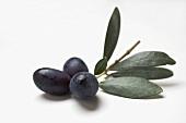 Olive sprig with black olives on white background