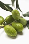 Olive sprig with green olives (close-up)