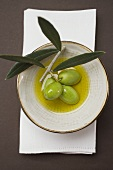 Green olives on twig in bowl of olive oil (overhead view)