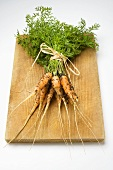 A bunch of young carrots with soil on chopping board