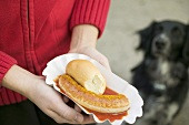 Hands holding sausage with ketchup & curry powder in paper dish, dog