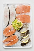 Fresh salmon and sea bass pieces on tray of ice