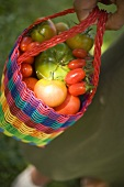 Woman holding shopping bag full of tomatoes (various types)