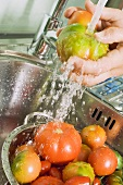 Washing tomatoes