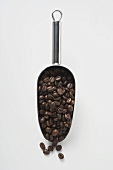 Coffee beans in metal scoop