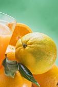 Several oranges beside glass of orange juice