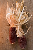 Cobs of corn (Autumn decoration, USA)