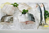 Various types of fish on a platter of ice