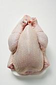 Frisches Huhn auf Styroportasse