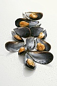 Mussels, opened, with drops of water