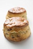 Raisin scone and plain scone