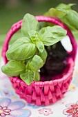 Basil plants in pink basket