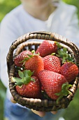 Person holding basket of fresh strawberries