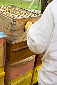 Beekeeper in front of several beehives