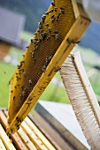 Brushing bees off a honeycomb