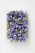 Borage flowers in plastic tray