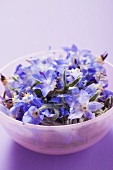 Borage flowers in pink bowl