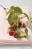 Raspberries on branch on tea towel