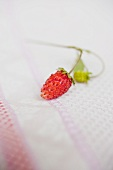 Wild strawberry on tea towel