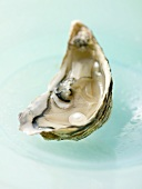 Fresh oyster with pearl on blue plate