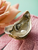 Fresh oyster with pearl on pink glove