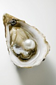 Fresh oyster with pearl