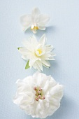 Three different white flowers