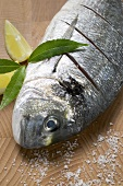Gilthead bream with salt, bay leaves and lemon wedges