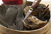 Fresh oysters in woodchip basket, oyster glove and knife