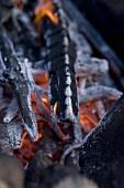 Camp-fire (close-up)