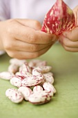 Child's hands with borlotti beans and pod