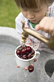 Child washing cherries under tap
