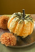 Coloured pumpkin between two flowers on plate