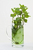 Mint sprigs and cucumber slices in jug of water