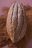 Cacao fruit on cocoa powder