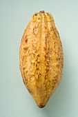 Cacao fruit on light background