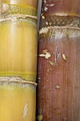 Sugar cane (detail)